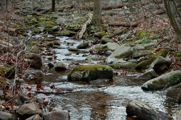 Mountain stream in central Pennsylvania (photo by Doris High)